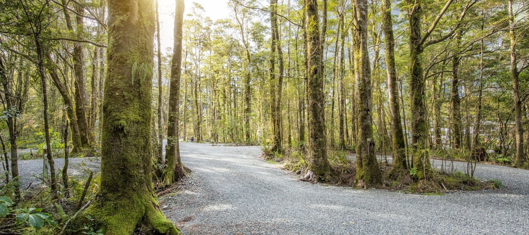 The entry to the Rainforest Campervan Park at Milford Sound Lodge.