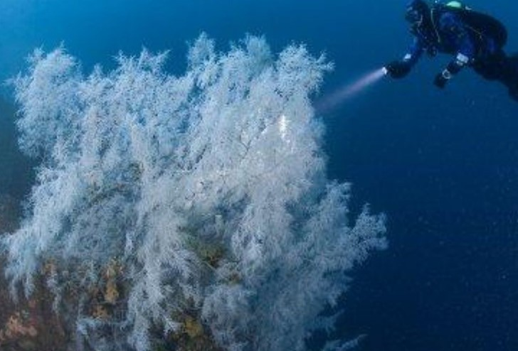 A diver shines a light on a piece of coral in a Milford Sound Dive experience, Milford Sound Lodge.
