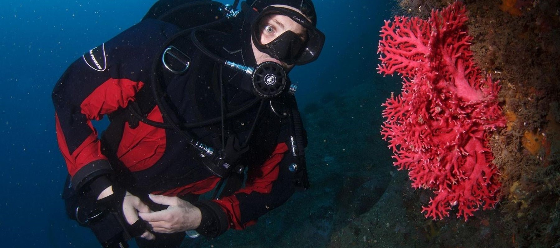 A diver looks at a vibrant red coral in Milford Sound, one of Milford Sound Lodge's activities.